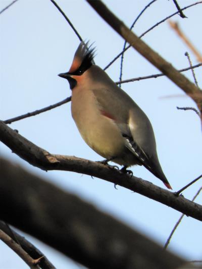 奥須磨公園の野鳥たち