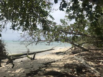 のんびりとしたカリブ海沿岸の田舎町Cahuitaへ