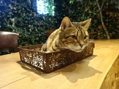 倉敷猫屋敷や猫店長や猫カフェの街倉敷