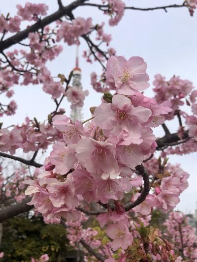 花の都東京:梅が盛りの芝公園、増上寺、湯島天満宮を散策する