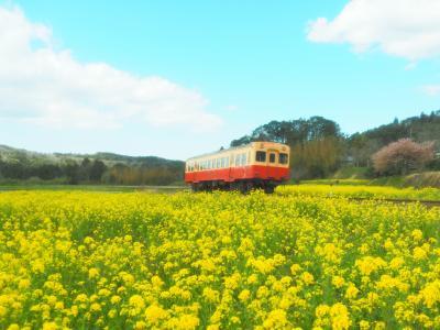 菜の花色の小湊鉄道
