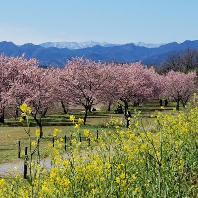 坂戸の不思議スポットと早咲きの寒桜を訪ねる☆埼玉県:坂戸市