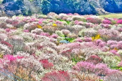 イベント中止に❗️梅などの春の花を訪ねる❗️