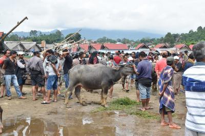 20年ぶりのインドネシア(6)タナトラジャ