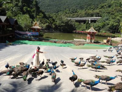 5歳娘を連れて中国シーサンパンナ5日間の旅4-原始林公園でアイニ族とクジャクと戯れる
