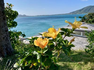 JAL どこかにマイル  *南の島* ~奄美大島に決定~ その2 <Uターンして良かった、金作原原生林>