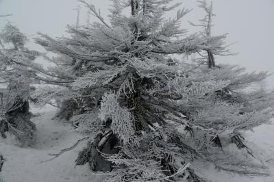 2つの名湯でめぐる 2県またぎで見る 2つの蔵王樹氷3日間 その3