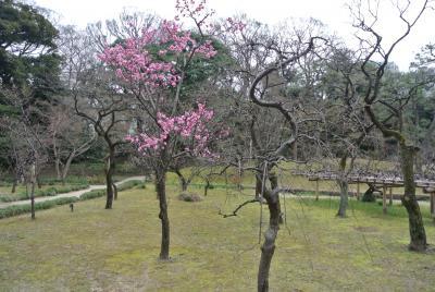 【ぶらちふりん】コロナウイルスに負けずに六義園~小石川後楽園散歩。梅は咲いたか桜はまだかいな?