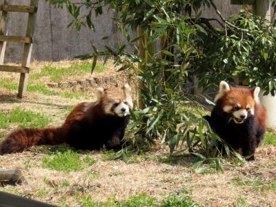福知山市動物園 どれくらい大きくなってるかな? 5ヶ月ぶりに会う令明君の成長ぶりが楽しみです!!