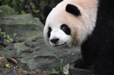 パンダ旅その7