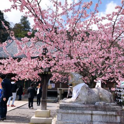 急がなくっちゃ! 桜の便りが来ているのに~