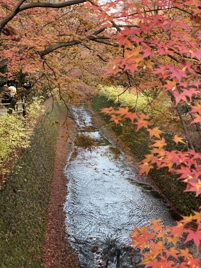 2019.12京都北野天満宮紅葉狩り