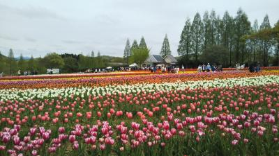 令和初日の世羅高原農場*春の風景