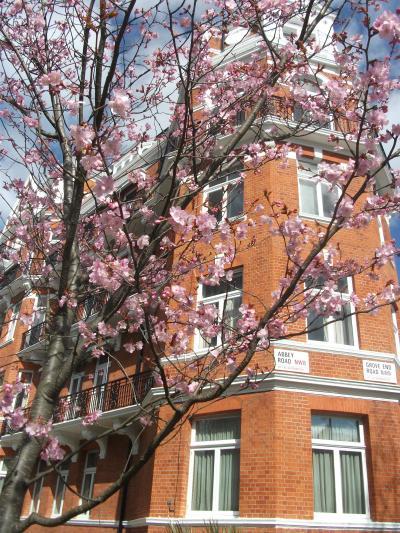 ロンドンの春を探して~レスタースクエア・アビーロード