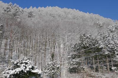 犬なき喪失を癒す旅 ② 10日ぶりの木曽福島スキー  春スキーとは思えない素晴らしい雪!!パート2