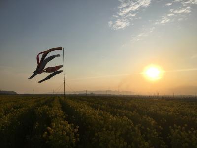 岡山☆菜の花畑に夕陽を見に行きました