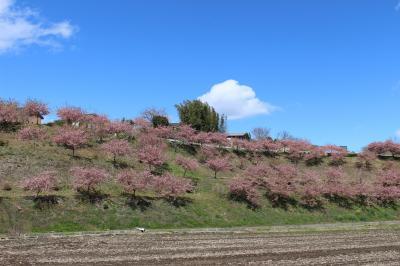 群馬の山里に、春が来た