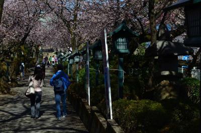 安行桜と密蔵院