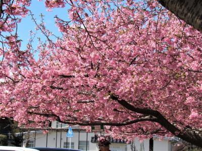 2020年3月河津桜を愛でてから、福島県水郡線矢祭町の鮎を食べました。