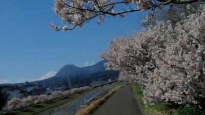 春爛漫🌸桜並木 お花見日和②