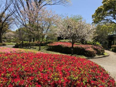 密を避けて春を愛でるマダム旅 福岡編その1 福岡市動植物園