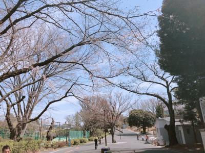春の横浜散歩 菊名 三ツ沢 みなとみらい