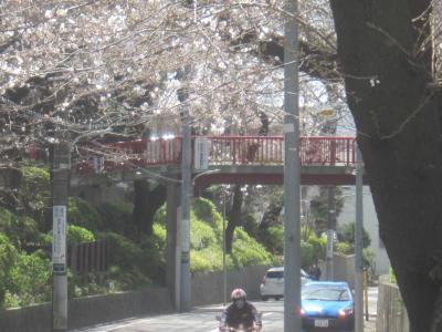 ちょっと早かった今年の桜 洗足池公園と桜坂 ぽかぽか陽気に誘われて田園調布まで歩いてみました