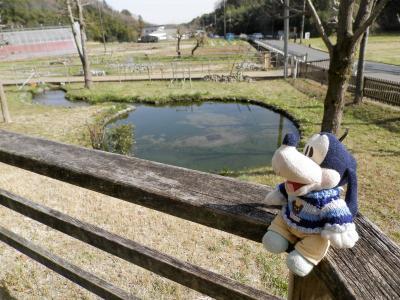 グーちゃん、鶴見川源流を見に行く!(グー散歩/源流確認達成の大きかった代償!編)
