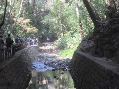 23区唯一の渓谷・等々力渓谷の後でニコタマまで、そして目黒川の桜を見に行く