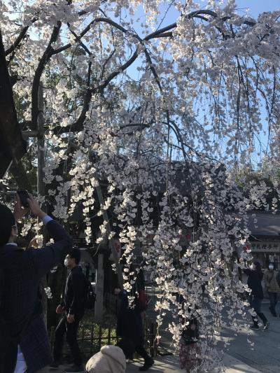 京都 4時間散策 東本願寺・金閣寺・平野神社・北野天満宮