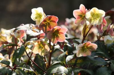 早春の西山公園花だより♪