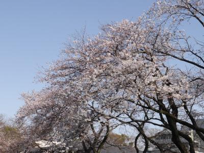里見公園の桜☆2020/03/21
