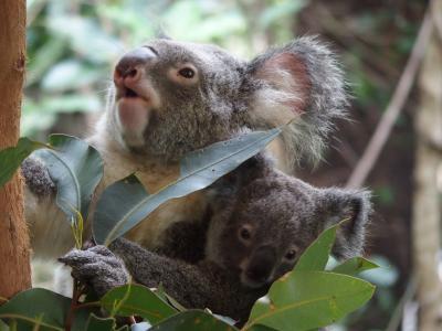 ケアンズ到着~ハートリース・クロコダイルアドベンチャー ~2019年8月 オーストラリア・ケアンズ旅行記 その1~