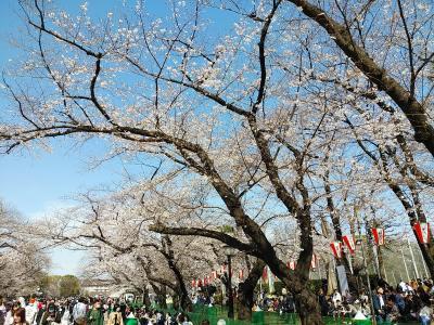 東京2020桜 【2】上野公園
