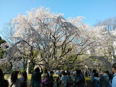 東京2020桜 【3】六義園