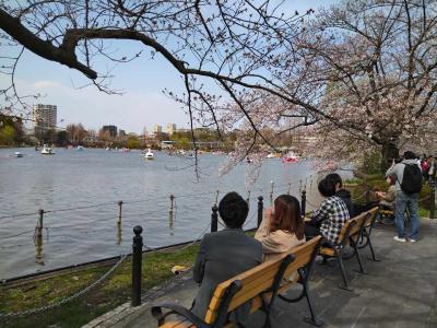 【東京】上野公園で満開の桜を楽しむ 【上野公園散策】