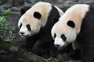 パンダ旅その8