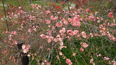 京都植物園の四季-その1(早春)