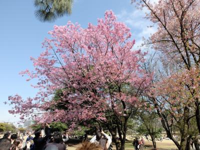 「 一気に春が 新宿御苑 さくら サクラ 桜 」 2020