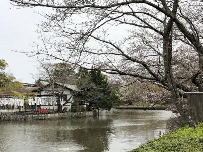 まだ一分咲き、鎌倉のお花見