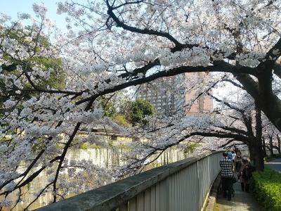東京2020桜 【4】神田川(法明寺~早稲田~江戸川橋)