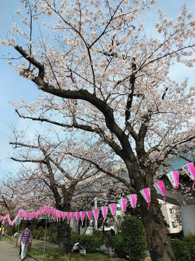 東京2020桜 【5】隅田川