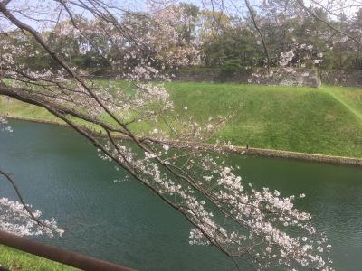 千鳥ヶ淵の静かな桜、新しい原宿、高輪ゲ