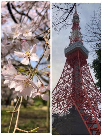 桜を見ながらブラブラ散歩【六義園】から【東京タワー】まで