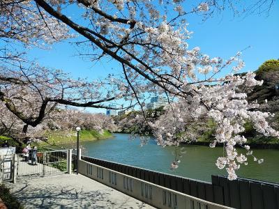 東京2020桜 【6】皇居&靖国神社