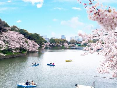 桜満開の千鳥ヶ淵★*゚2016