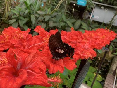 自然を楽しむペナン島 3日目