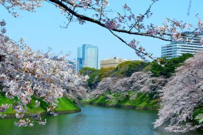 美しいけれど寂しい千鳥ヶ淵の春