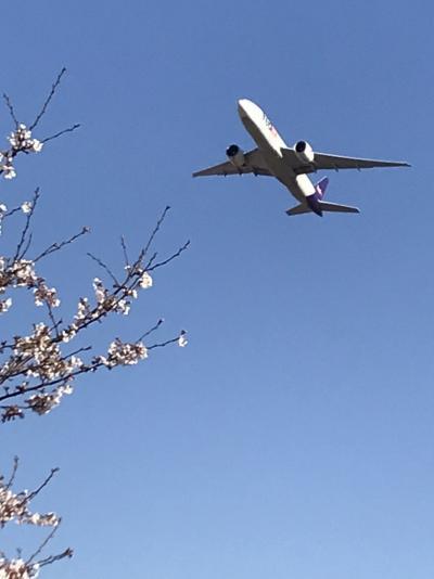 飛行機と桜を楽しむプチ旅♪