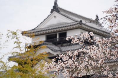 20200326-1 松山 花曇りの松山城公園で、陽光とか大島桜とか。染井吉野も少し咲き始め。